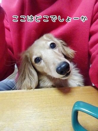 kinako8851.jpg