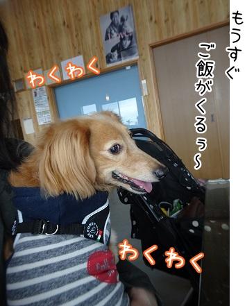 kinako8863.jpg