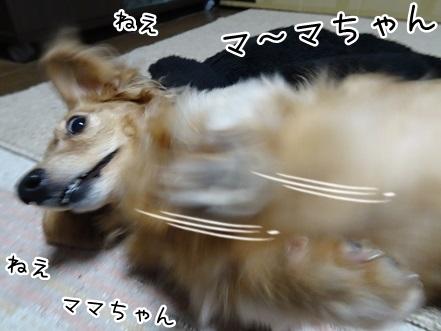 kinako8869.jpg