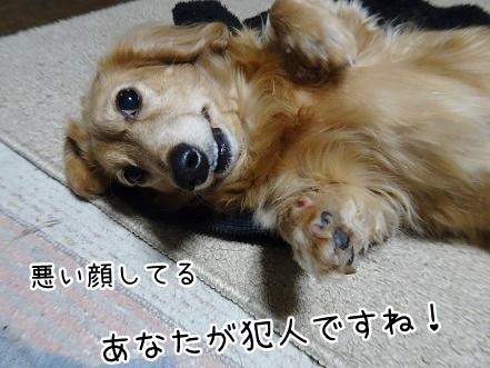 kinako8870.jpg