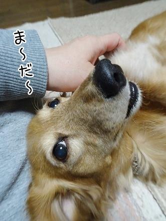 kinako8871.jpg