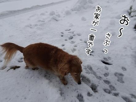 kinako8874.jpg