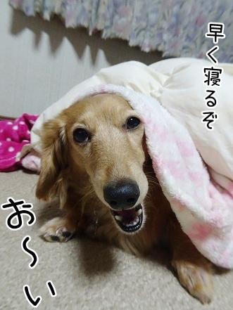 kinako8877.jpg