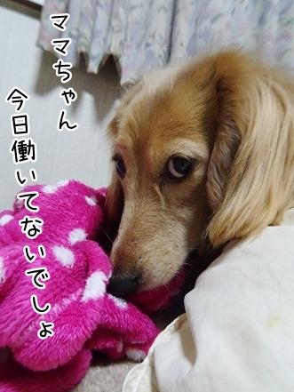 kinako8879.jpg