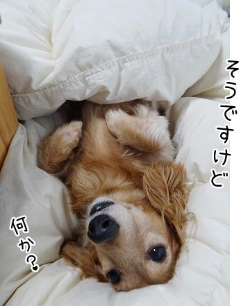 kinako8881.jpg