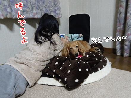 kinako8884.jpg