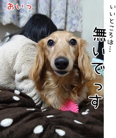 kinako8885.jpg