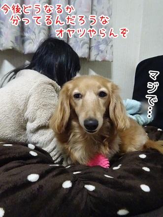 kinako8886.jpg