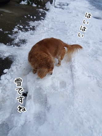 kinako8894.jpg