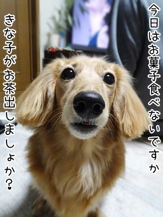 kinako8913.jpg