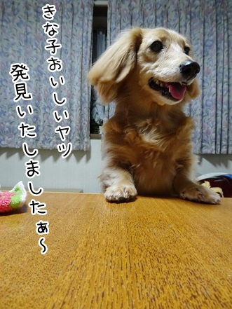 kinako8915.jpg