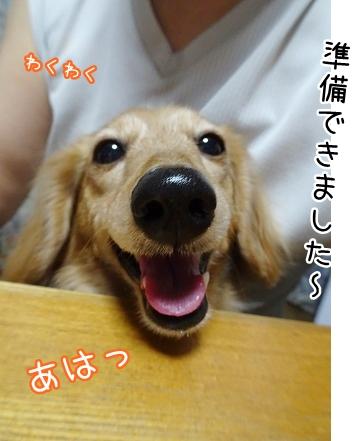 kinako8916.jpg