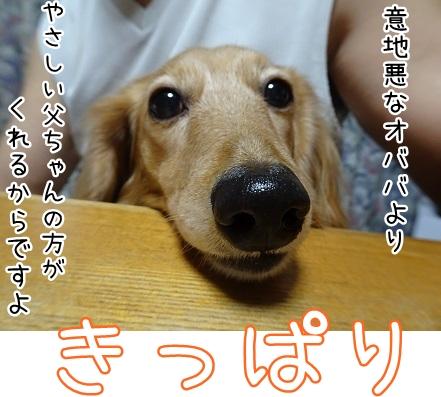 kinako8917.jpg