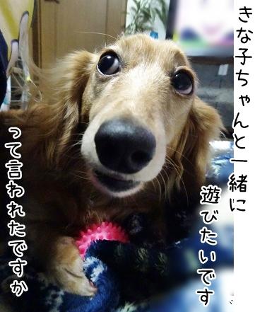 kinako8921.jpg
