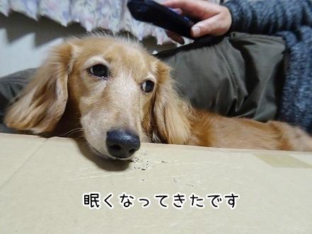 kinako8932.jpg