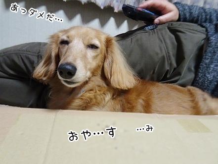kinako8934.jpg