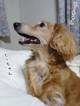 kinako8937.jpg
