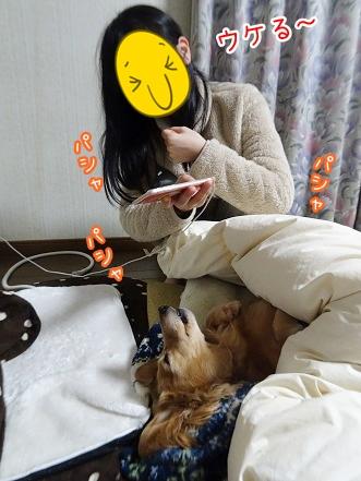 kinako8942.jpg