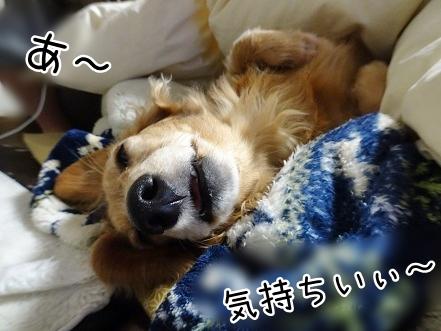 kinako8945.jpg