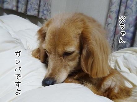 kinako8948.jpg