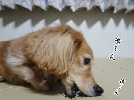 kinako8951.jpg