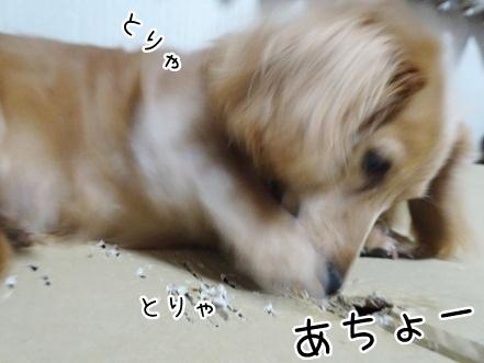kinako8953.jpg