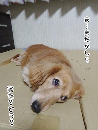 kinako8960.jpg