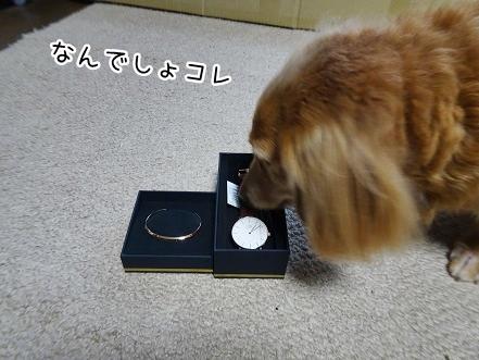 kinako8967.jpg
