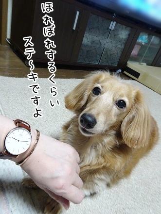 kinako8969.jpg