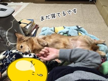 kinako8973.jpg