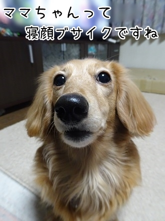 kinako8977.jpg