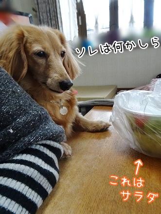 kinako8979.jpg