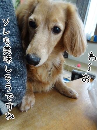 kinako8980.jpg