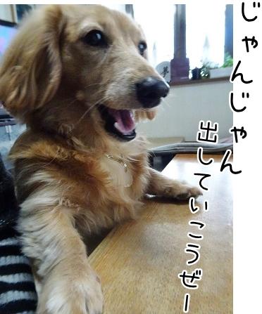 kinako8981.jpg
