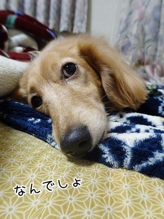 kinako8985.jpg