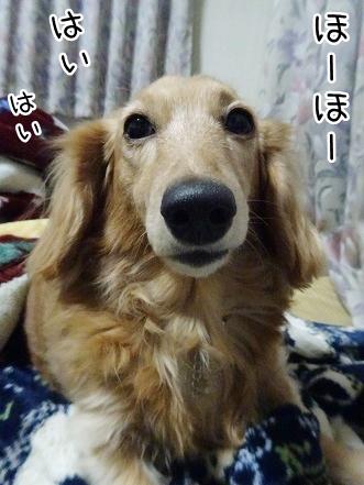 kinako8986.jpg