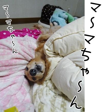 kinako8989.jpg