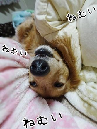kinako8990.jpg