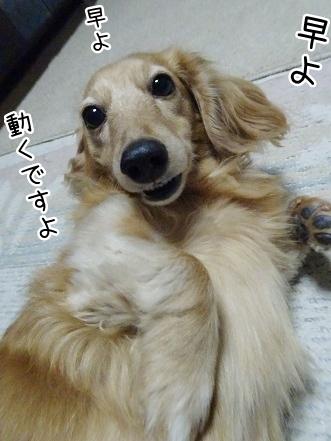 kinako8997.jpg