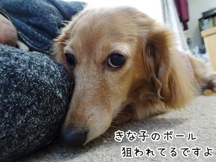 kinako9006.jpg