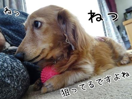 kinako9008.jpg