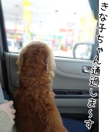 kinako9018.jpg