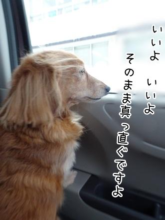 kinako9019.jpg