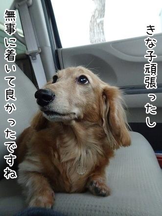 kinako9020.jpg