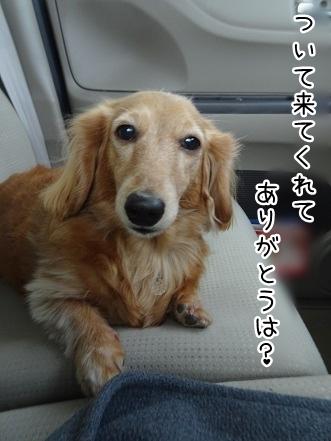 kinako9021.jpg
