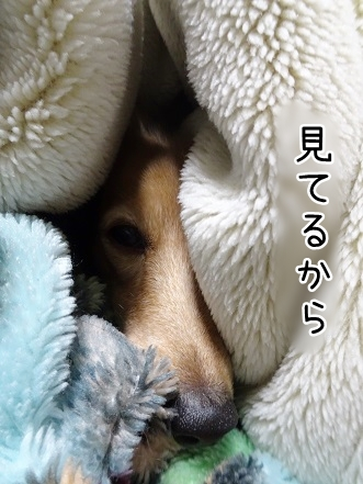 kinako9029.jpg