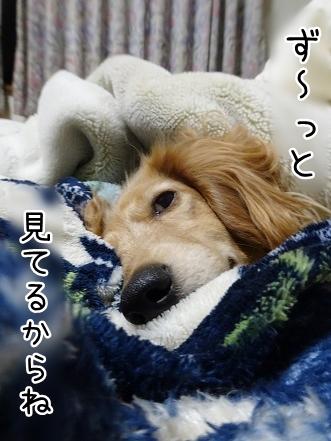kinako9030.jpg