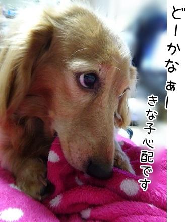 kinako9032.jpg