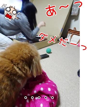kinako9034.jpg