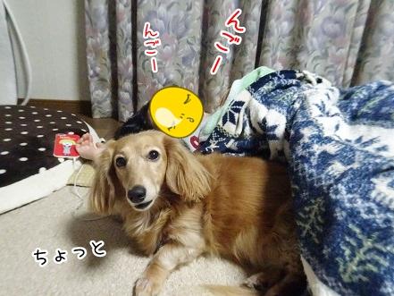 kinako9037.jpg